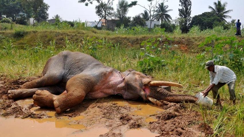 60% de los animales del mundo, fueron exterminados por los humanos en 4 décadas