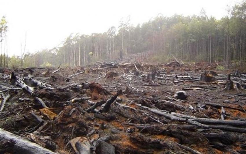 Noruega, el primer país del mundo en prohibir la deforestación